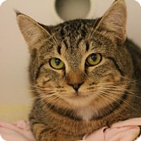 Adopt A Pet :: Will - Fountain Hills, AZ