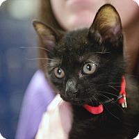 Adopt A Pet :: Jax - Baytown, TX