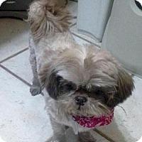 Adopt A Pet :: Mochaccino - Dallas, TX