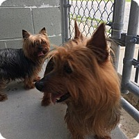 Adopt A Pet :: Riley and Sadie are Bonded! - Washington, DC
