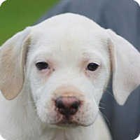 Adopt A Pet :: Joni Mitchell - ADOPTED - Brattleboro, VT