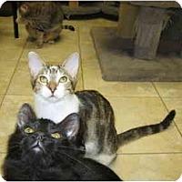 Adopt A Pet :: Bella & Mindy - Deerfield Beach, FL