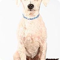 Adopt A Pet :: Logan - Beaumont, TX
