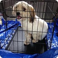 Adopt A Pet :: R.I.DIXIE - W. Warwick, RI
