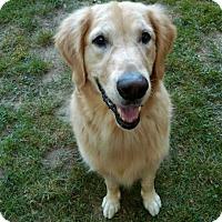 Adopt A Pet :: Buddy - New Canaan, CT