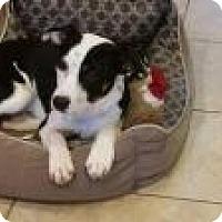 Adopt A Pet :: Groot - Marlton, NJ