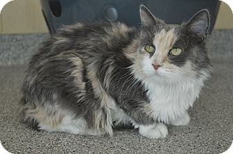 Calico Cat for adoption in Prince George, Virginia - Delilah
