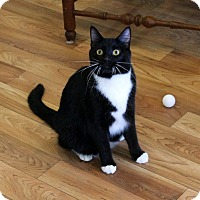 Adopt A Pet :: Sparkles - Gaithersburg, MD