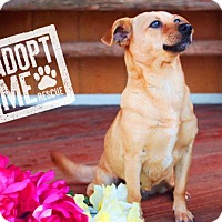 Adopt A Pet :: Winnie - Fort Valley, GA