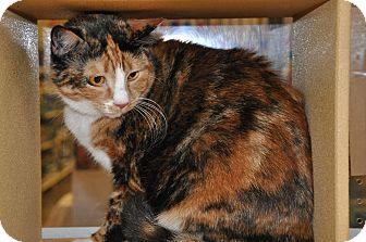 Calico Cat for adoption in Temple, Pennsylvania - Carmella