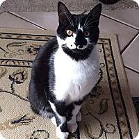 Adopt A Pet :: Daffy - Port Republic, MD