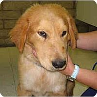 Adopt A Pet :: Nick - Scottsdale, AZ
