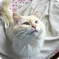 Adopt A Pet :: Stewart - Xenia, OH