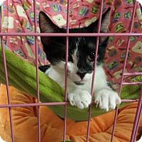 Adopt A Pet :: Ceelo - Chesapeake, VA