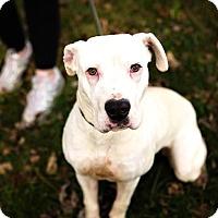 Adopt A Pet :: Dena - RESCUED! - Zanesville, OH