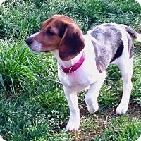 Adopt A Pet :: Cricket - Palm Bay, FL