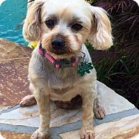 Adopt A Pet :: Addie - Alpharetta, GA