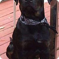 Adopt A Pet :: BooBa - Pierrefonds, QC
