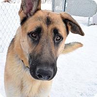 Adopt A Pet :: Cyrus - Meridian, ID