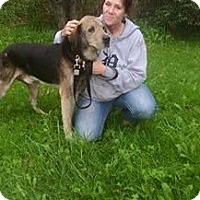 Adopt A Pet :: Zeus - Bay City, MI