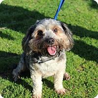 Adopt A Pet :: Mick - Conway, AR