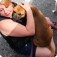 Boxer Mix Dog for adoption in Sidney, Maine - Bruce
