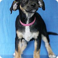 Adopt A Pet :: Tennesee - Waldorf, MD