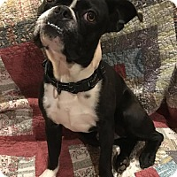 Adopt A Pet :: Hogan - Abilene, TX
