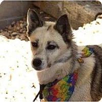 Adopt A Pet :: Xena - Golden, CO