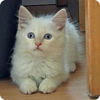 Adopt A Pet :: Chance - Escondido, CA