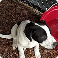 Adopt A Pet :: Memphis - Woodlawn, TN