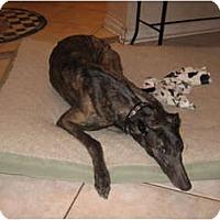 Adopt A Pet :: Magda - Canadensis, PA