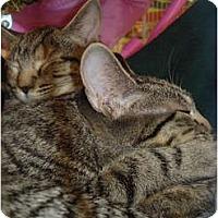 Adopt A Pet :: Andy & Annie - Chesapeake, VA