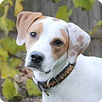 Adopt A Pet :: Athena- Wisconsin - Wood Dale, IL