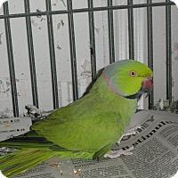 Adopt A Pet :: Oscer - Neenah, WI
