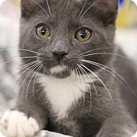 Adopt A Pet :: Freddie - Sacramento, CA