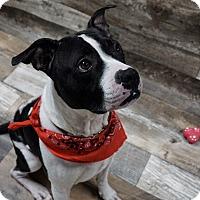 Adopt A Pet :: Dom - Muskegon, MI