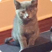 Adopt A Pet :: Lynette - McKinney, TX