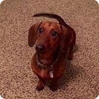 Adopt A Pet :: Gus - Dallas, TX