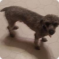 Adopt A Pet :: LEO - Bowie, TX
