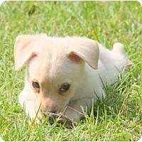 Adopt A Pet :: PEGGY SUE - Bryan, TX