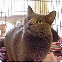 Adopt A Pet :: Tigris&Euphrates 4-PAW DECLAW - Chesapeake, VA
