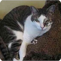 Adopt A Pet :: Cappuchino - Fort Lauderdale, FL