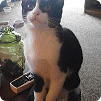 Adopt A Pet :: Rudy - Troy, OH