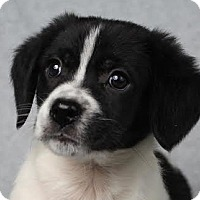 Adopt A Pet :: Alex - Minneapolis, MN