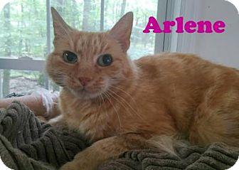 Domestic Shorthair Cat for adoption in East Stroudsburg, Pennsylvania - Arlene