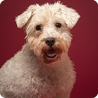 Adopt A Pet :: Rose Marie - Meet me! - Norwalk, CT