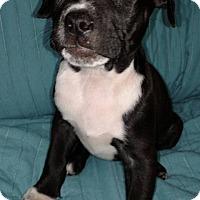 Adopt A Pet :: Em - Savannah, GA