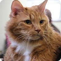 Adopt A Pet :: Daisy 34928418 - Westampton, NJ