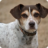 Adopt A Pet :: Alice - Hagerstown, MD